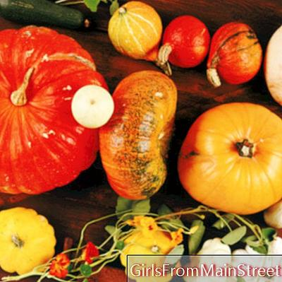 4 гурме идеи за приготвяне на забравени зеленчуци