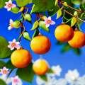 Τα οφέλη της ανθοφορίας πορτοκαλιού